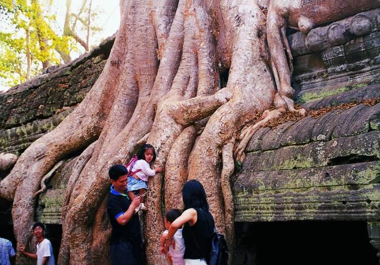 古树与古迹的纠缠