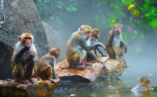深入海南猴岛,用科学+影像探索南中国生态秘境