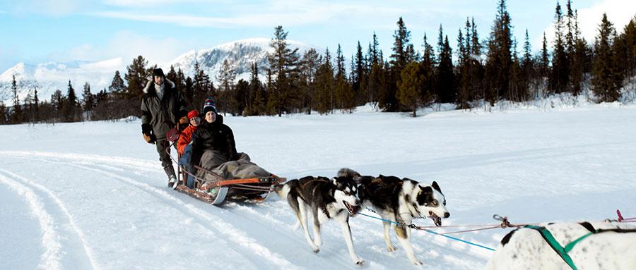 野外探险小百科:狗拉雪橇,体验滑雪和驾乘的双重乐趣