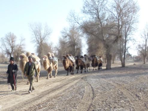 中国探险协会牛人节目 | 汝志刚:15天瘦25斤、脚踝肿半年的极限沙漠穿越